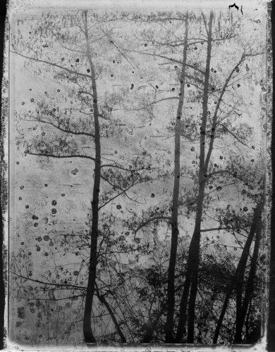 Fog-Polaroid Fujifilm FP 3000B 45-ToyoField 45AII camera-Janvier 2014